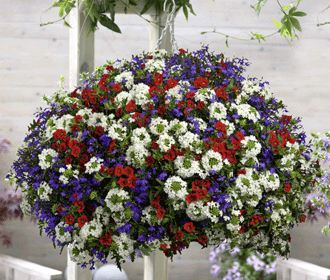 The perfect hanging basket for Fourth of July!: Blue Flowers, Fourth Of July, Red White Blue, Blue Gardens, Google Search, Flower Gardens, Flowers Garden, Hanging Baskets, Planters Ideas