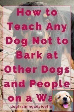 1 Have Dog Behavior Problems Learn About Dog Behavior Regression