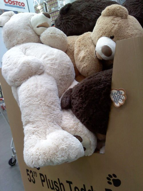 One Of Those Giant Sized Teddy Bears From Costco Or Just Any Giant
