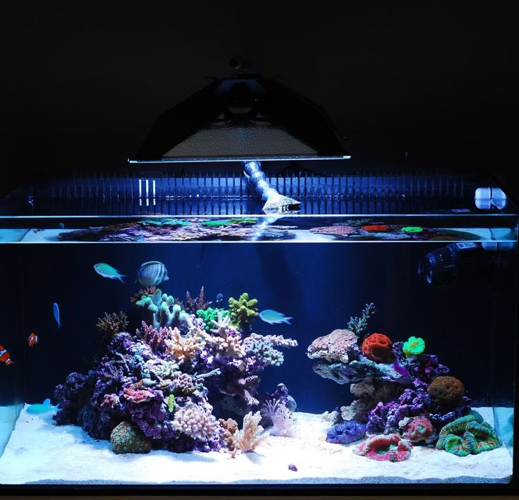 Image Result For Jelly Fish Aquariums