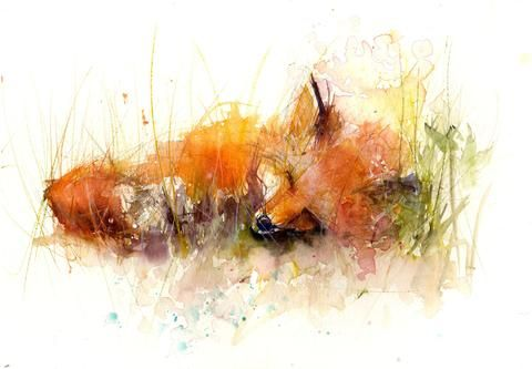 LIMITED EDITON PRINT 'Sleeping Fox'