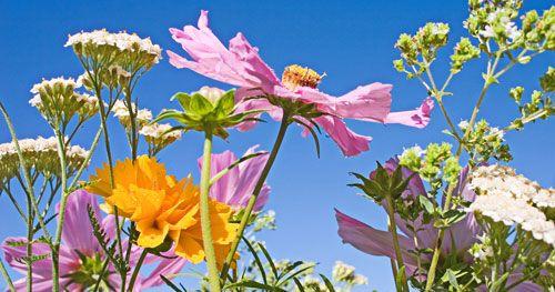 Découvrez les plantes drainantes du Printemps pour faire peau neuve et détoxifier votre organisme.