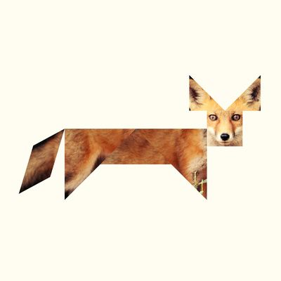 Fox #illustration