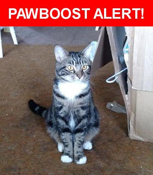 Please spread the word! Nova was last seen in Mount Carmel, PA 17851.    Nearest Address: Near W 2nd St & N Poplar St