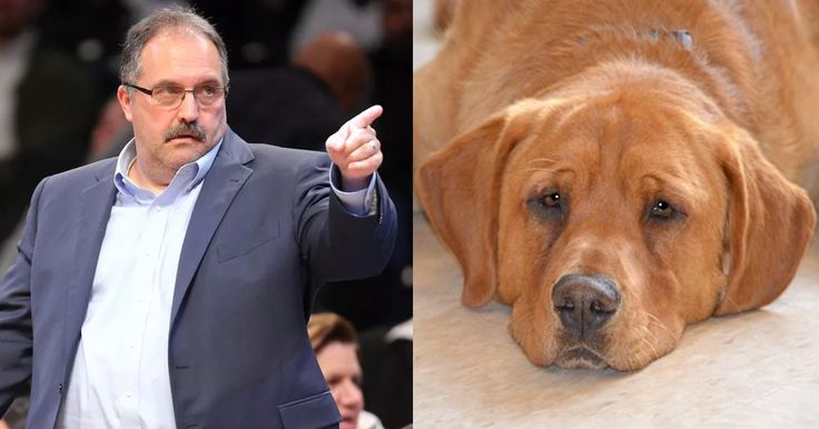 Stan Van Gundy adopts very last dog remaining at animal shelter - SBNation.comclockmenumore-arrowConcertLincoln MKCexperience mkc : The Labrador Retriever has leg deformities and bad eyesight, but it was the last dog left at the shelter.