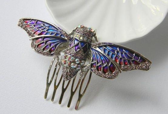 kind of bug cicada