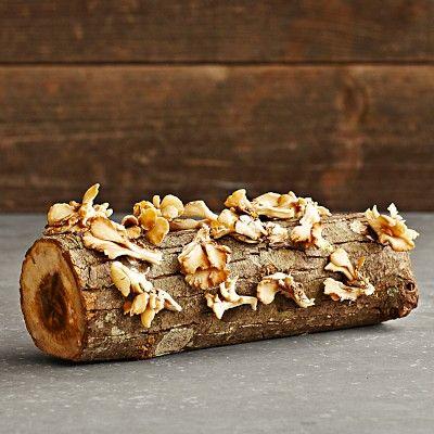 Oyster Mushroom Log #williamssonoma
