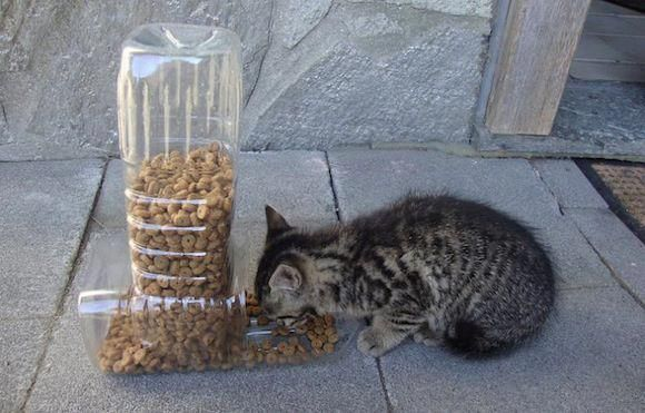 Here's a simple feeder you can make for your kitty using 2 plastic bottles