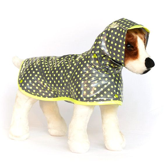 Best 25+ Designer Dog Clothes Ideas On Pinterest