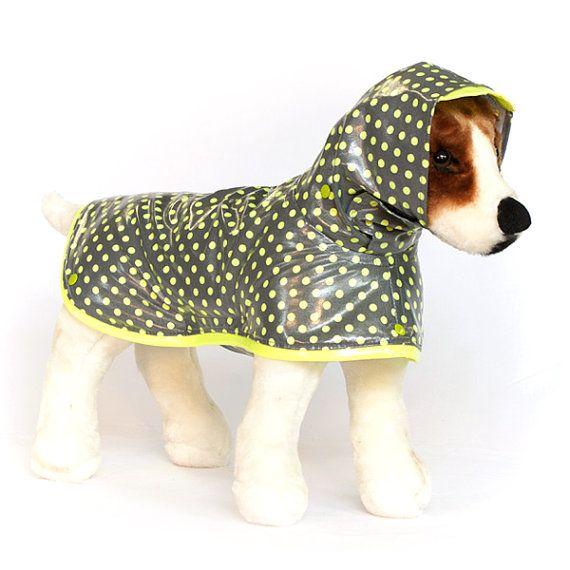 Nuggets Yellow Warm Up Jacket: Best 25+ Designer Dog Clothes Ideas On Pinterest