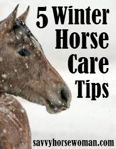 5 Winter Horse Care Tips | Savvy Horsewoman