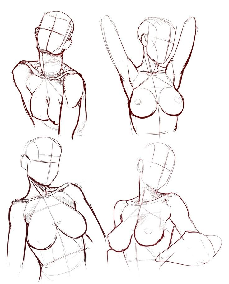 Female anatomy.