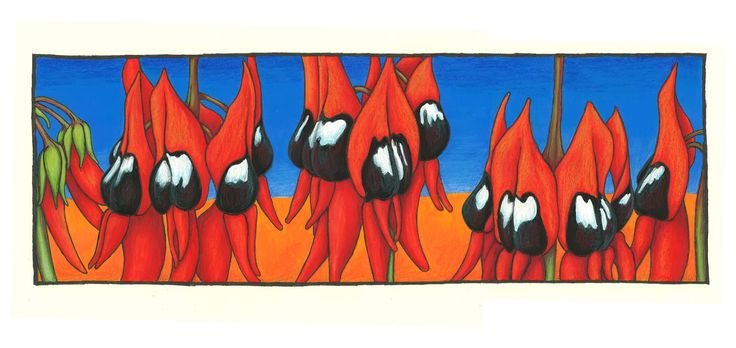 Karen Bailey Sturt Desert Pea 2 Coloured Pencil over acrylic paint. Click back to post to find out more about the drawing. Contact the artist through the blog for information on sales and commissions.