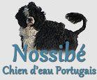 Éleveur de chien d'eau portugais Mirabel, Laurentides - Nossibé