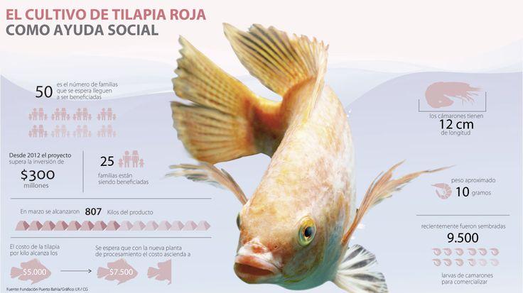 La Fundación Puerto Bahía ve en cultivo de tilapia una ayuda comunitaria