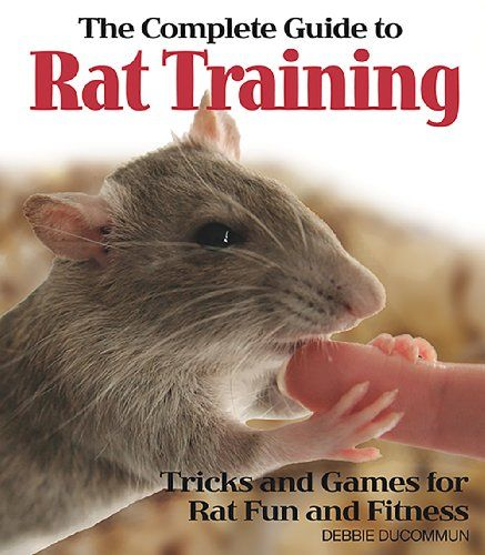 The Complete Guide to Rat Training | I miss having rats :3