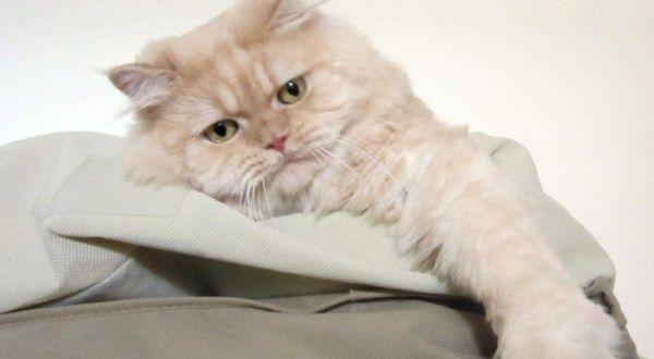 Γάτες: Και όμως δένονται, αγαπούν και νιώθουν! - CatWay.gr