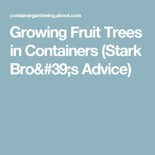 Growing Fruit Trees in Containers (Stark Bro's Advice)