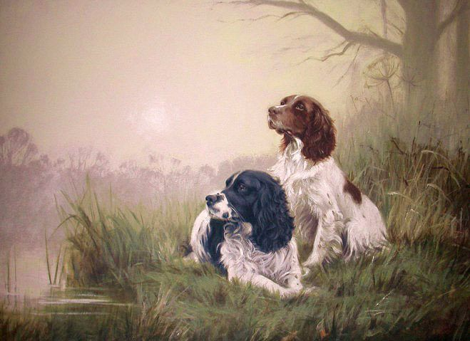 "Gail Tointon - ""Morning Sunrise."" English Springer Spaniels (field)."