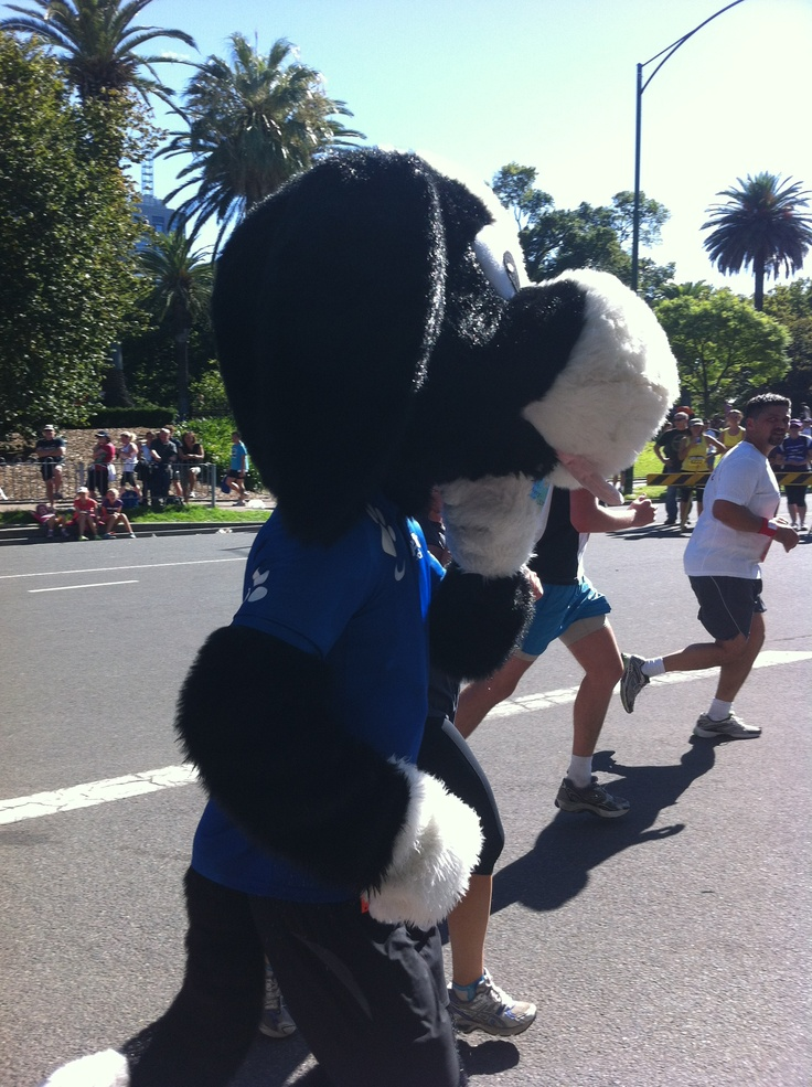 We all cheered extra loud for buddy as he ran 15km for Run for the Kids 2013!