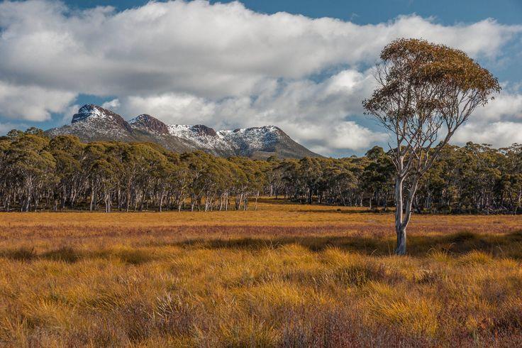 Dans le parc national Franklin-Gordon sur l'île de #Tasmanie en #Australie.