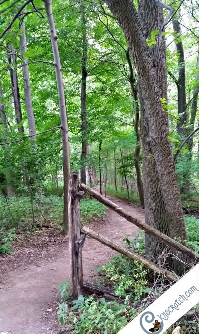 The Sacred Grove- I can't wait to go! Tips for visiting the LDS church history sites in New York