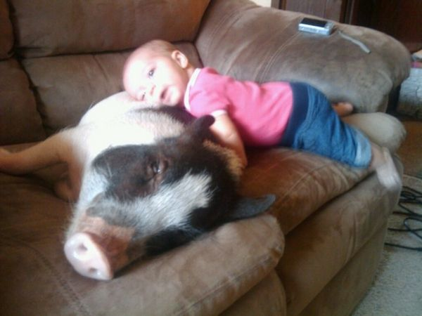 Kids And Their Pets | Pet pigs, Cat and Animal