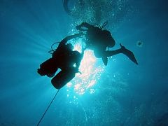 Calypso Dive & Adventures JHB