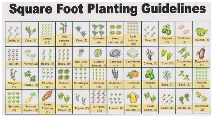 17 Best Images About Planting Guide On Pinterest Gardens