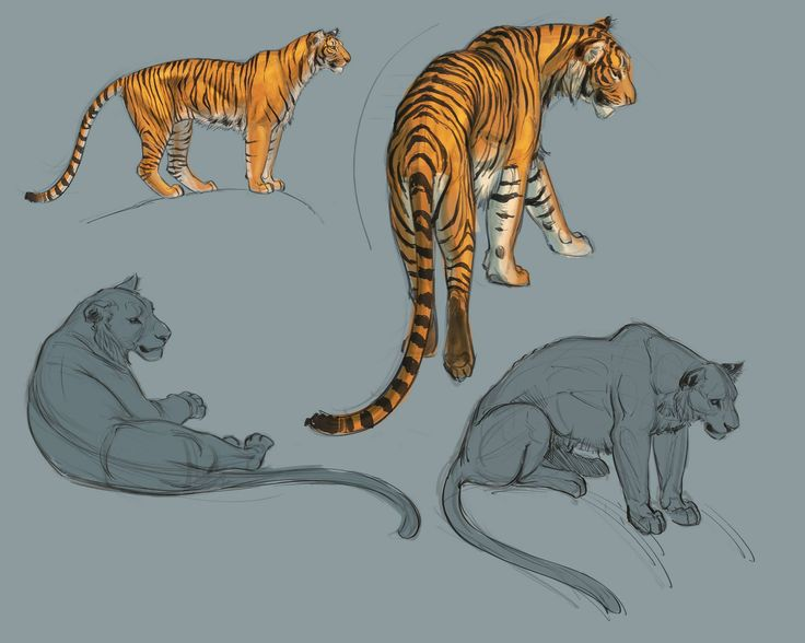 Character Design With Aaron Blaise : Best aaron blaise images on pinterest animation