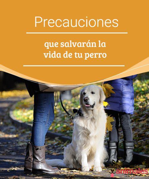 Precauciones que salvarán la vida de tu perro  Hay medidas preventivas que salvarán la vida de tu perro en casos excepcionales. Descubre cuáles son. ¿A qué esperas para aplicarlas? #prevenir #casos #perro #consejos