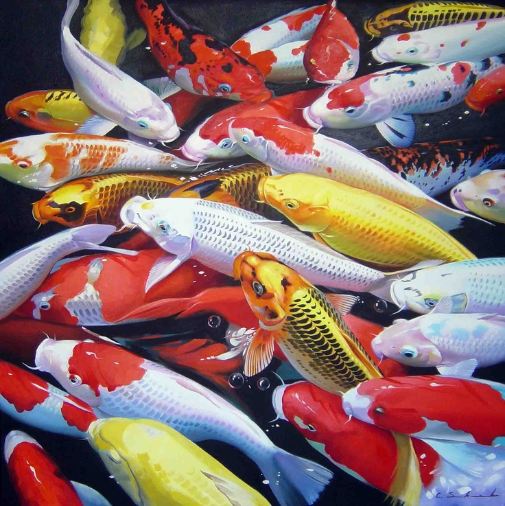 19 best images about koi fish on pinterest shops cas for How much are koi fish