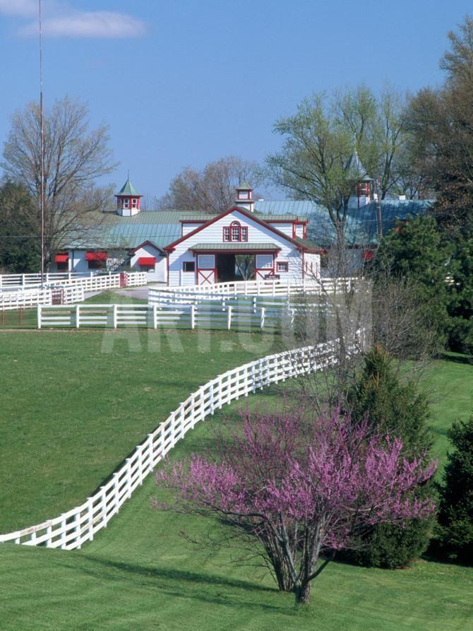 Calumet Horse Farm Lexington KY Photographic Print
