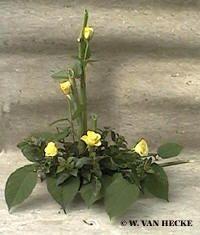 bloemschikken met snijbloemen herfst rozen gerbera bloemstuk maken herfstsfeer in huis halen met bloemen