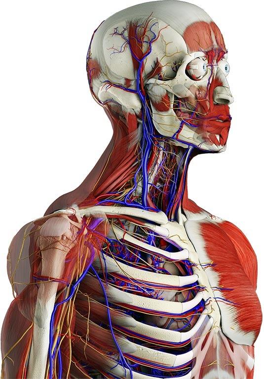 91 best Medical Apps images on Pinterest | App, Apps and Med school