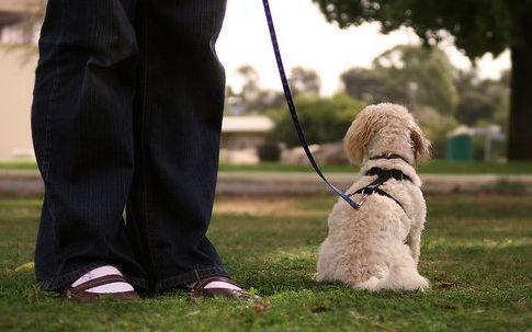 kutya, viselkedés