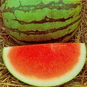 Summer Sweet Red Seedless Watermelon Plant