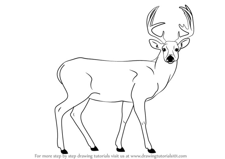 Deer Contour Line Drawing : The best deer images on pinterest line drawing
