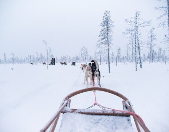 Husky safari in Lapland Finland is good fun! What an activity for Christmas morning.