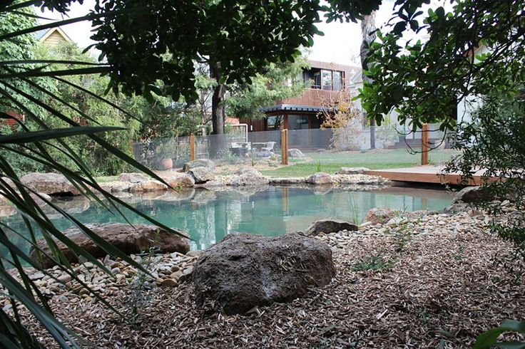 1000 ideas about natural pools on pinterest natural swimming pools swimming ponds and for Natural swimming pool australia