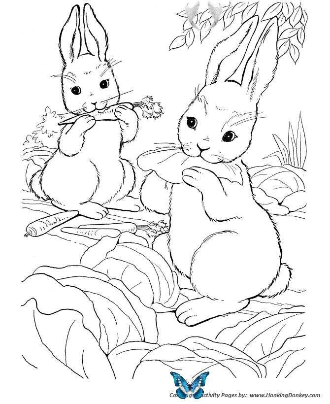 Farm Animal Coloring Pages Wild Bunny Rabbit Coloring Page And Kids Activity Sheet Br I 2020