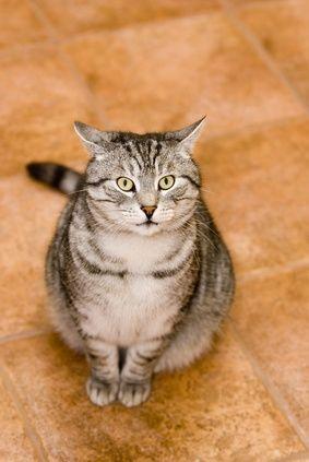 How Do I Get My Cat to Stop Knocking on My Door?