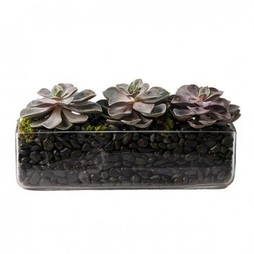 Succulent in a Row | Succulent and Plant Delivery NYC | Plantshed.com | Glass rectangular vase filled with rocks for drainage then filled with Echeverias and polished stones. Great look! Sunny location and water once every three to four weeks.  PlantShed | Succulent in a Row | Succulent & Plant Delivery NYC | Glass vase filled with rocs for drainage, then filled with echeveria succulents and polished stones. Great look for any home or office.