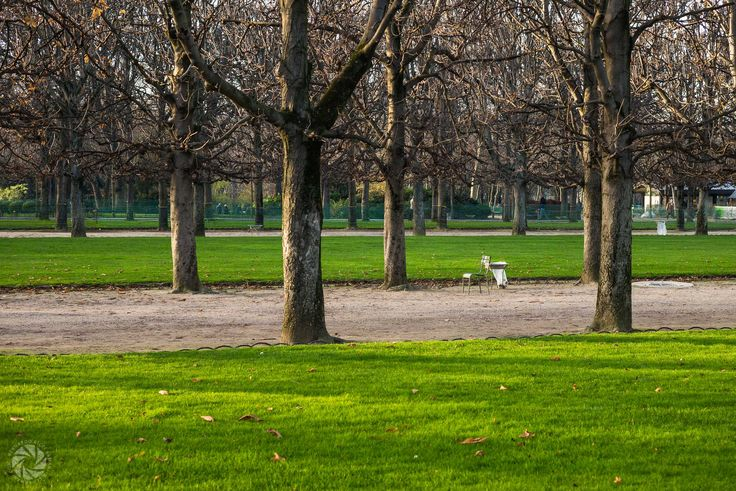 Winter Morning at the Jardin du Luxembourg