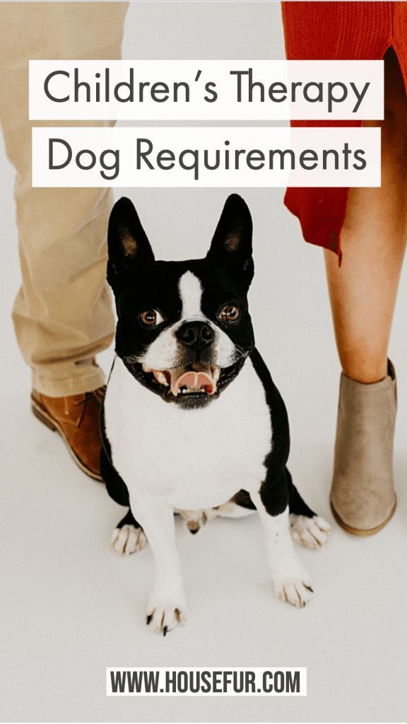 Your Guide For Children S Therapy Dog Requirements Therapy Dogs
