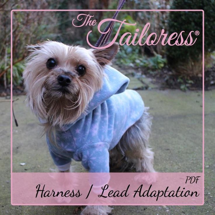 Harness / Lead Adaptation for Dog Clothes | Craftsy