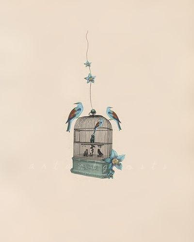 beautiful bird illustration