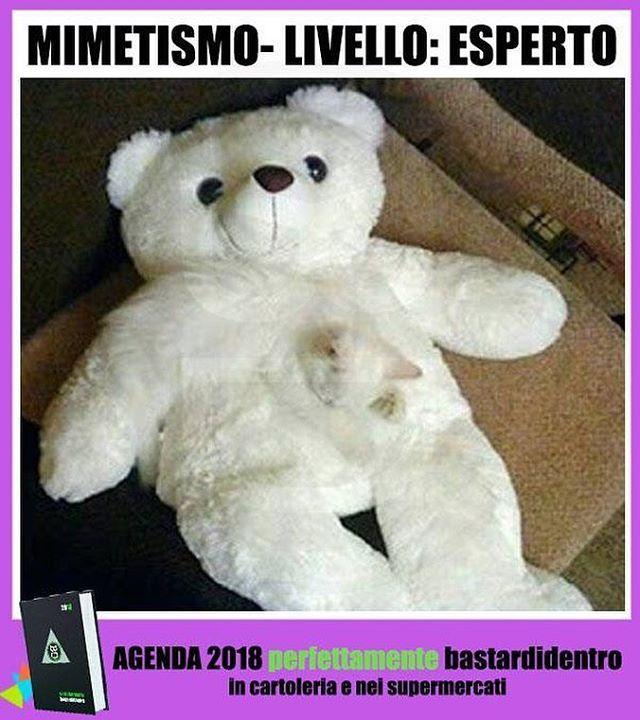 Livello esperto! Seguici su youtube/bastardidentro #bastardidentro #perfettamentebastardidentro #mimetismo #gatto www.bastardidentro.it