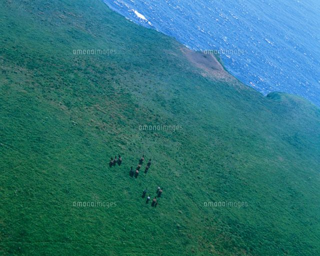 Yururi Island horses. ユルリ島の野生馬 (c)MASAAKI TANAKA/SEBUN PHOTO