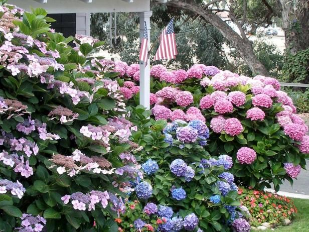 Hydrangeas, gardenia, butterfly bush and more all top the list of gorgeous summer-flowering shrubs. See the full list at HGTV Gardens.